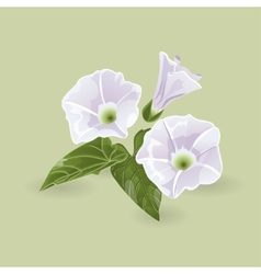 Delicate purple flowers vector