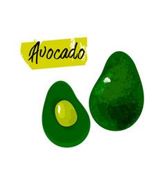 Healthy organic avocado vector
