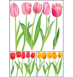 Beautiful tulips in different color vector
