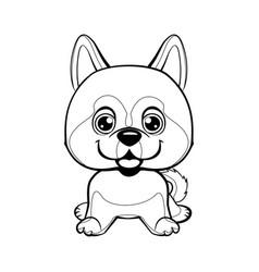 dog alaskan kli kai breed sitting lovely linear vector image