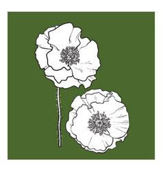 Black and white poppy flower blossom vector