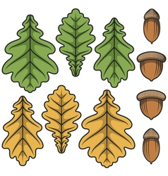 Color acorns and oak leaves vector
