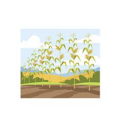 Corn fall harvest semi flat vector