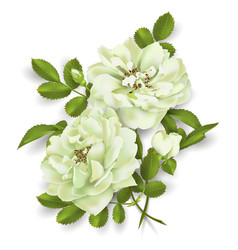 Realistic white rose 3d roses vector