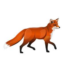 walking red fox vector image