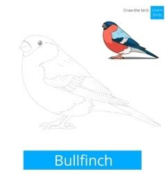 Bullfinch bird learn to draw vector