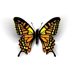 Realistic butterfly on white vector image