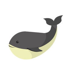 big black whale with white stomach isolated vector image