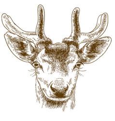 engraving of reindeer head vector image vector image