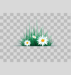 green grass on a transparent vector image