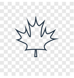 maple leaf concept linear icon isolated on vector image