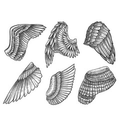 sketch wings hand drawn eagle angel detailed vector image