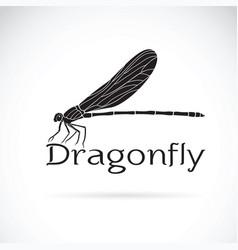 vestalis gracilis dragonflyamphipterygidae on vector image vector image
