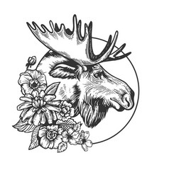 moose head animal engraving vector image