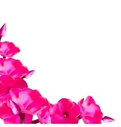 Pink Phlox Flowers vector