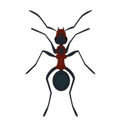 Ant nsect flat vector image vector image