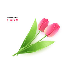 isolated realistic spring vector image