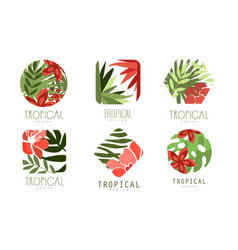 geometric tropical logo design collection with vector image
