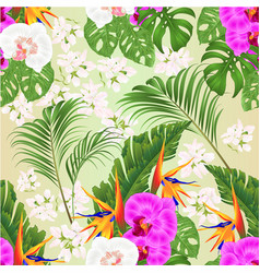 seamless texture orchids phalaenopsis vector image