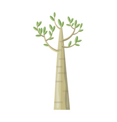 poplar tree with green leaves vector image vector image