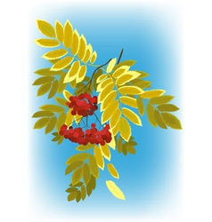 autumn rowan branch with berries and leaves yellow vector image