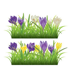 Crocus in the grass vector