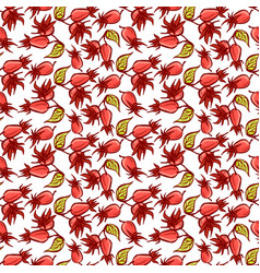 dogrose berries seamless pattern vector image