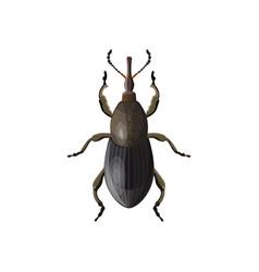 Weevil beetle vector