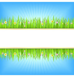 Summer background with green grass vector image vector image