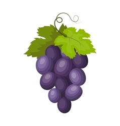 Bunch of wine grapes icon in cartoon style vector image