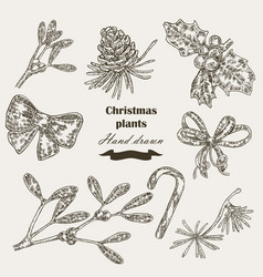 Hand drawn christmas plants mistletoe and holly vector