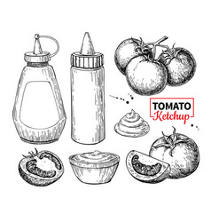 Ketchup sauce bottle with tomatoes drawing vector