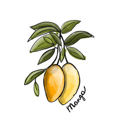 mango sketch for your design vector image