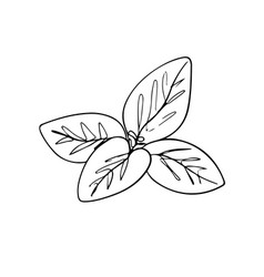 One line drawing mint leaf drawing vector