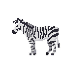 pixel zebra isolated vector image