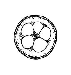 santol slice doodle slice fruit in hand vector image