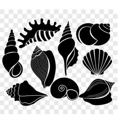 Set of beautiful sea shells vector