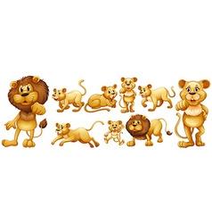 Set wild lions vector