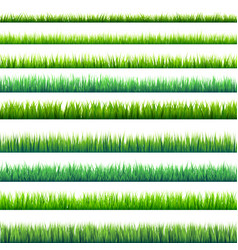 Grass isolated on white set green meadow nature vector