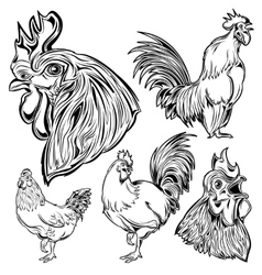 Cock Hand Drawn Set vector image vector image