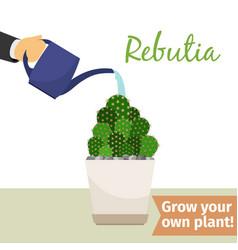 hand watering rebutia plant vector image