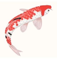 Koi rainbow carp Hand drawn fish isolated vector image