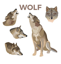 Gray wolves set vector
