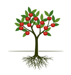 green summer tree with red apple and root vector image