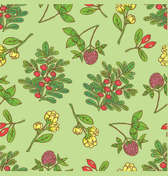 seamless pattern with barberries bearberry vector image