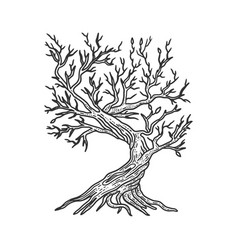 Tree without leaves sketch vector