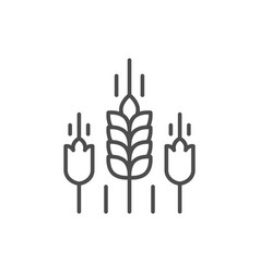 Wheat ears line outline icon vector