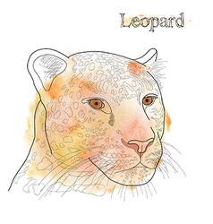 hand drawn pencil watercolor of leopard with label vector image