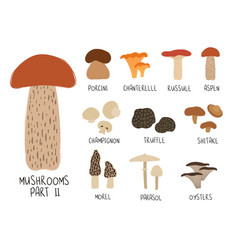 Collection or colorful isolated mushrooms vector