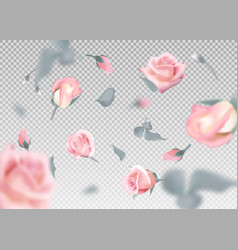 Pinkr ose falling flowers and buds vector